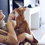 Evde Kedi Besleyenler İçin 5 Tüyo