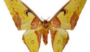 Galeri: Uçurtma Kadar Kelebek
