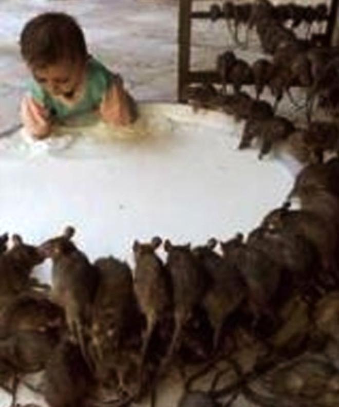 Sıçan Yiyerek Yaşayan Çocuklar!