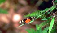 Galeri: Kelebek kanadındaki sır!