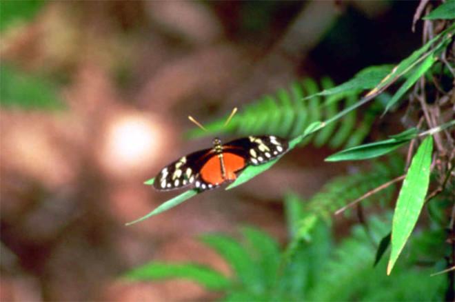 Kelebek kanadındaki sır!