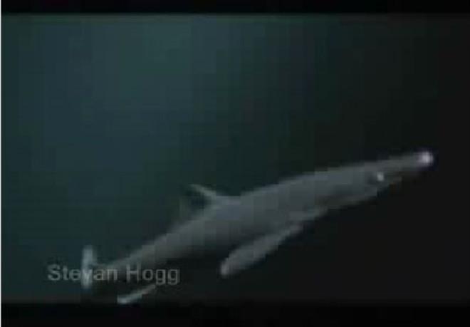 Ahtapot köpekbalığını böyle yuttu