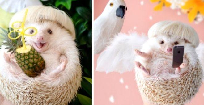 Instagram'ın yeni fenomeni: Sevimli kirpi