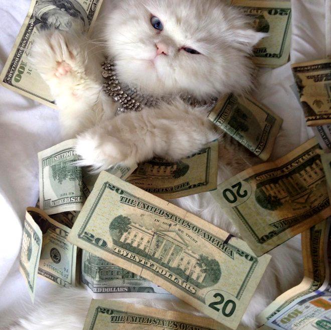 Milyonerleri kıskandıran zengin kediler
